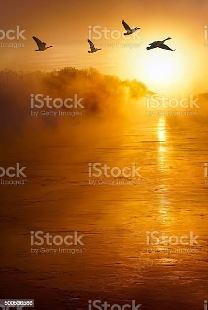 Flying birds across the river vertical image picture id500536586?b=1&k=6&m=500536586&s=612x612&h=yddwv y7bvjxqv431nxuvp1 mfe u81kigbr06wbcga=