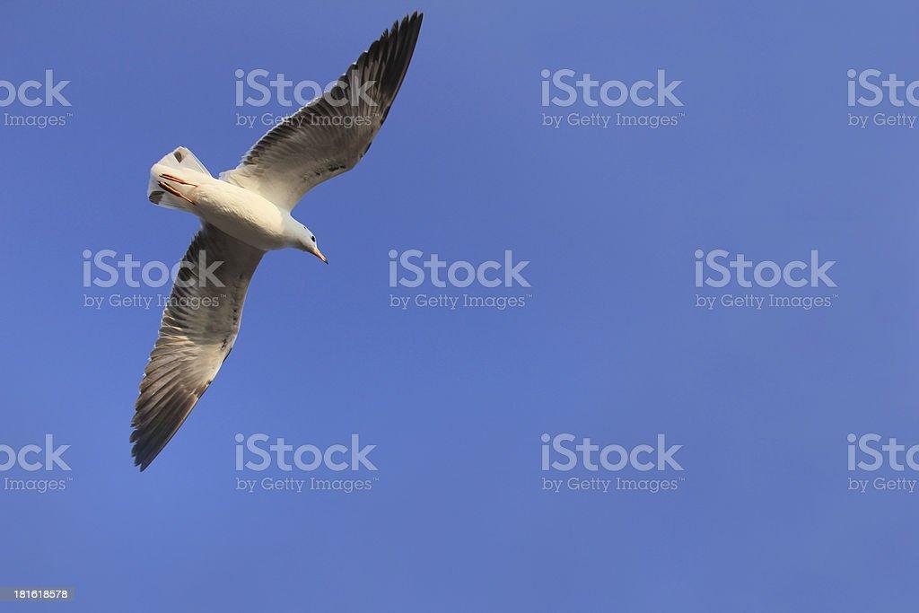flying birds again blue sky