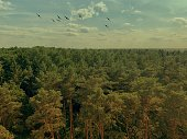 Flying Birds Over Forrest Shot From Above