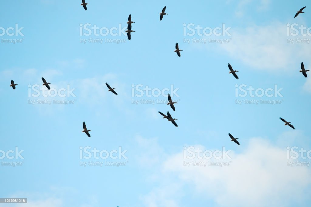 horizontal shot of birds flying above the sky in summer day.