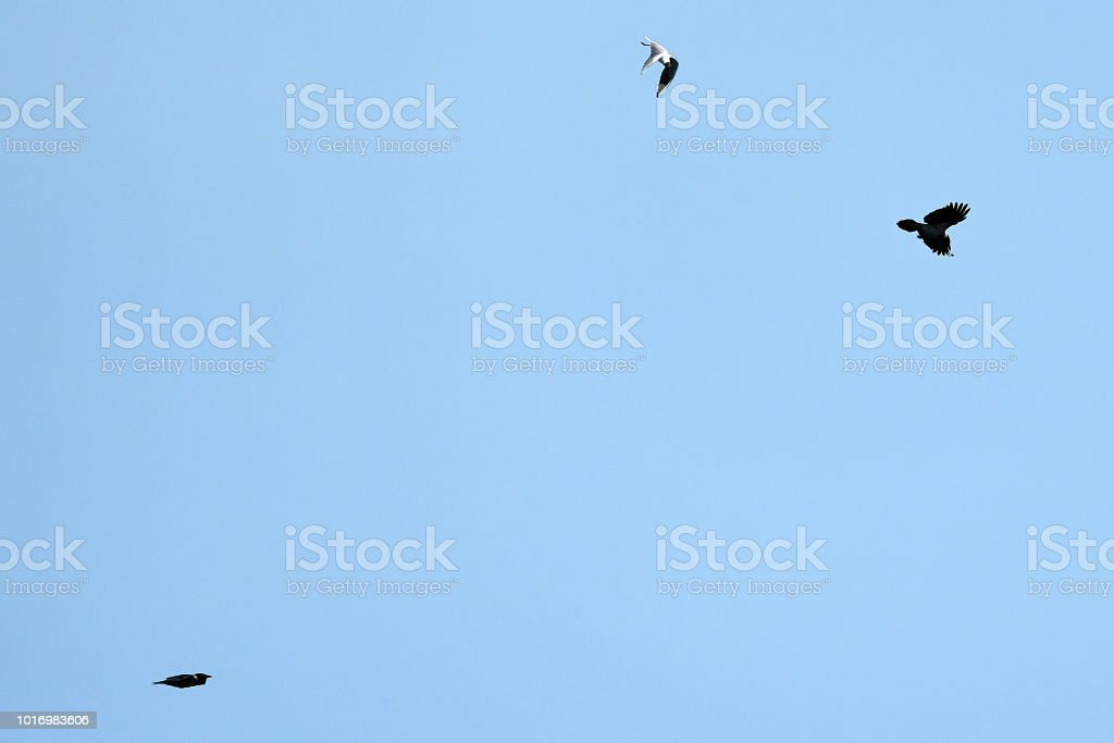 low angle view of cormorant and seagull flying over the sky.