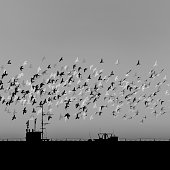 a flock of birds flying around against a sunset sky