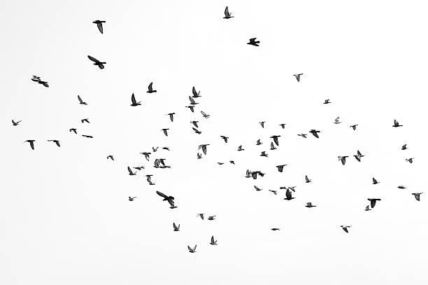 pájaros volando - pájaro fotografías e imágenes de stock