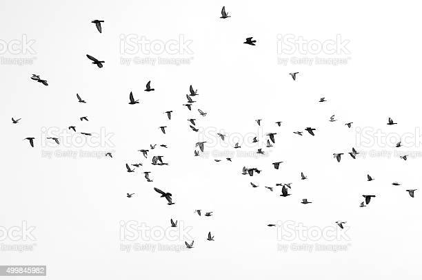Group of birds flying,