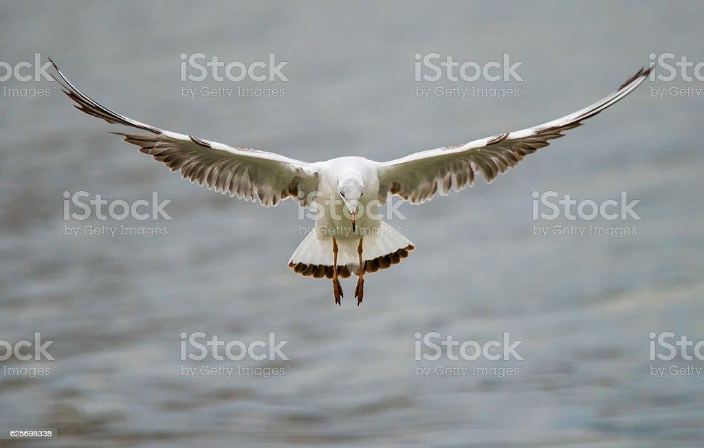 Fliegende Vögel  – Foto