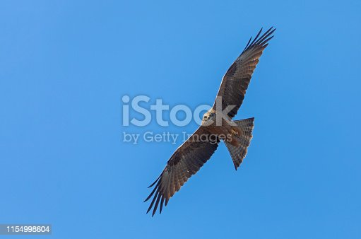Flying black kite against a blue sky.