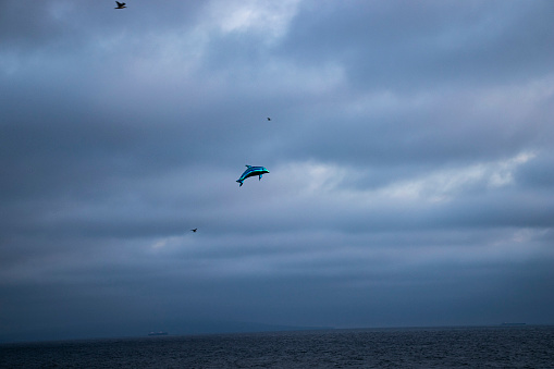 Flying blue dolphin balloon among seagulls over the Pacific Ocean, cloudy sky in the background, Santa Monica California