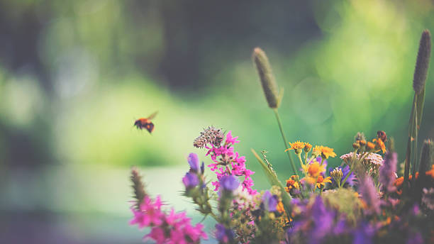 Flying bumblebee and summer flowers stock photo