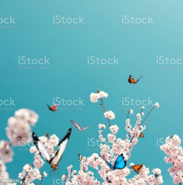 Flying butterflies picture id906104142?b=1&k=6&m=906104142&s=612x612&h=ysubstngl0oxehfrjvyullnixpmsk9 0yalxofincok=
