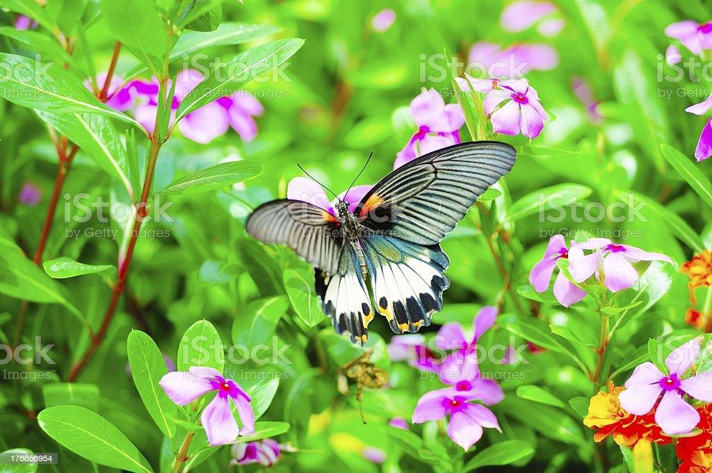 Mariposa volando foto de stock libre de derechos