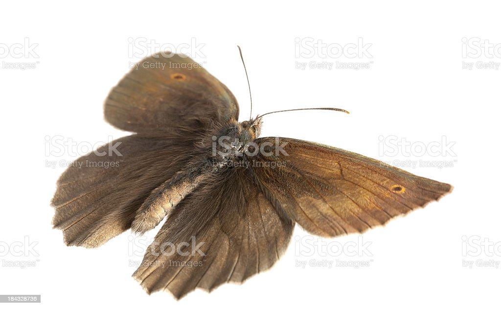 flying butterfly royalty-free stock photo
