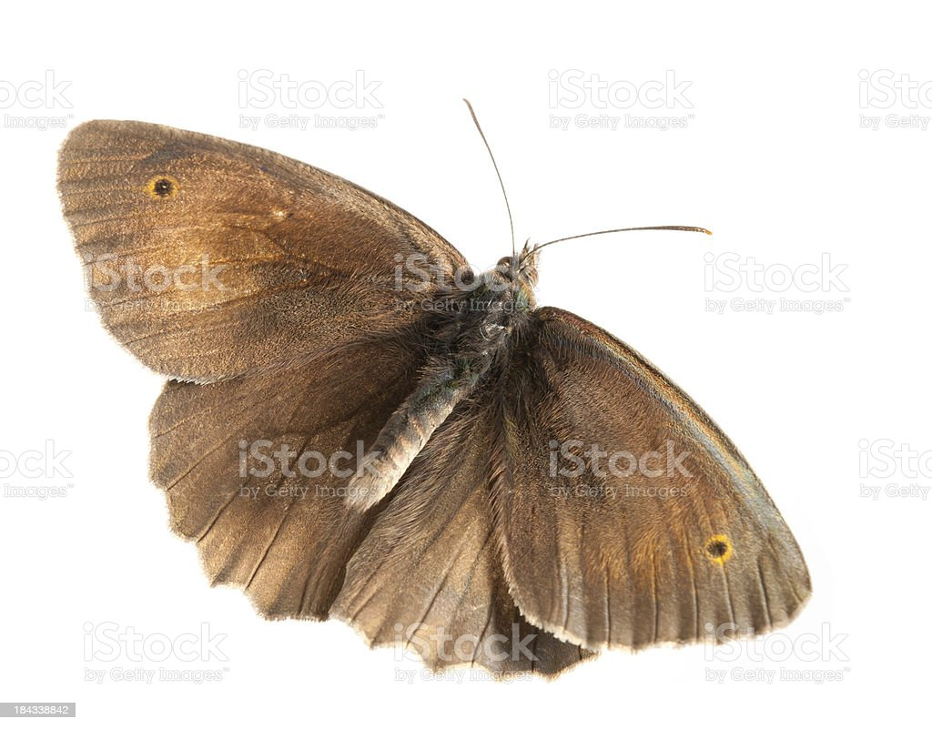 flying butterfly stock photo