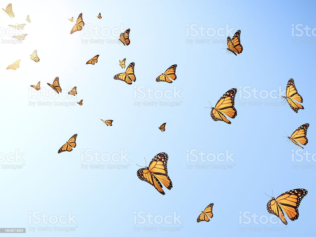 Flying butterflys stock photo