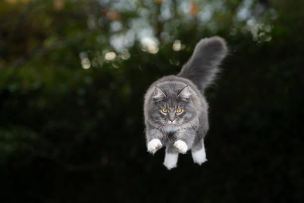 Flying cat picture id1182725632?b=1&k=6&m=1182725632&s=612x612&w=0&h=aiypaf19t9r5iuybvhobntahglupntkcle to uyarw=