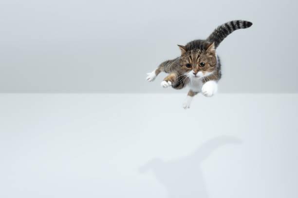 Flying cat picture id1185861587?b=1&k=6&m=1185861587&s=612x612&w=0&h=vicwefifdho0j g2nbv1pgwro7yxu5maymogwa2v9hy=