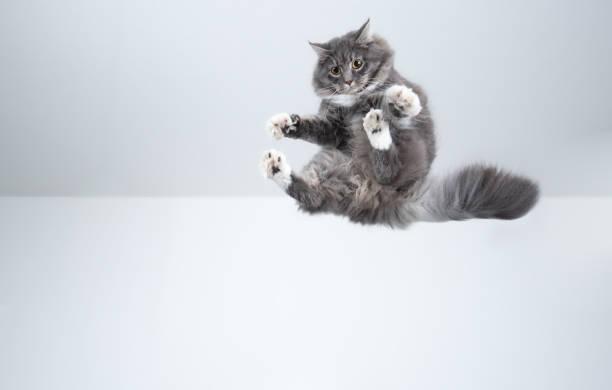 Flying cat picture id1185861588?b=1&k=6&m=1185861588&s=612x612&w=0&h=blp kbiwfkinssolafd9li7pmvq3nauiukpy0exslt8=