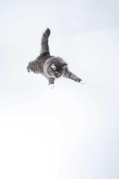 Flying cat picture id1185861796?b=1&k=6&m=1185861796&s=612x612&w=0&h=kqrzwl79zqhgibbktbiubgujgj4xbjuajoresyunq9u=