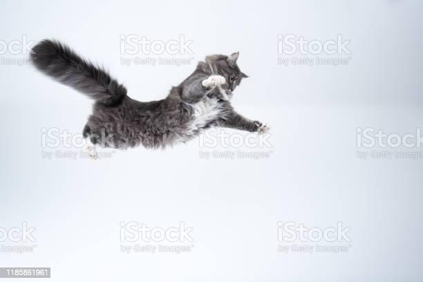 Flying cat picture id1185861961?b=1&k=6&m=1185861961&s=612x612&h=2c507kr ih07jdudciokxhe2jlbctmlridkthgzxfby=