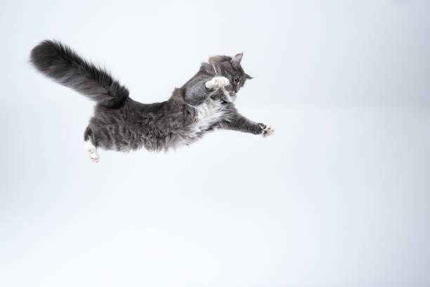 Flying cat picture id1185861961?b=1&k=6&m=1185861961&s=612x612&w=0&h=jpdffxfwndinyepdapl7zuwcbncy7zus6rleht8rzze=