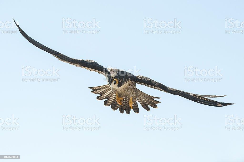 Flying close stock photo