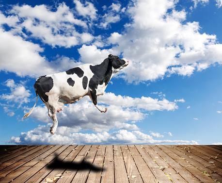 istock Flying cow 1014745828