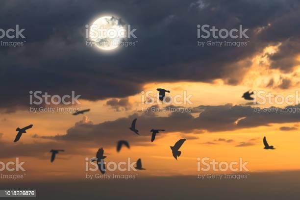Flying crows on halloween picture id1018226876?b=1&k=6&m=1018226876&s=612x612&h=9peousvnsuhpexk2y ffopot4h7vqztw1yuyfbxuiyg=