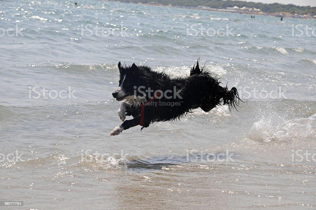 flying dog (series) royalty-free stock photo
