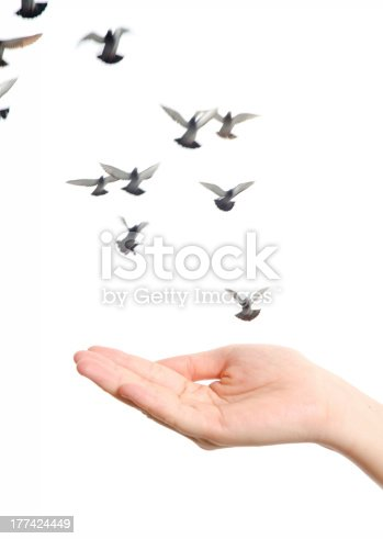 istock flying dove with open hand 177424449