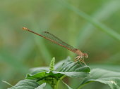 Dragonfly, Animal Wing, Close-up, Flying, Transparent