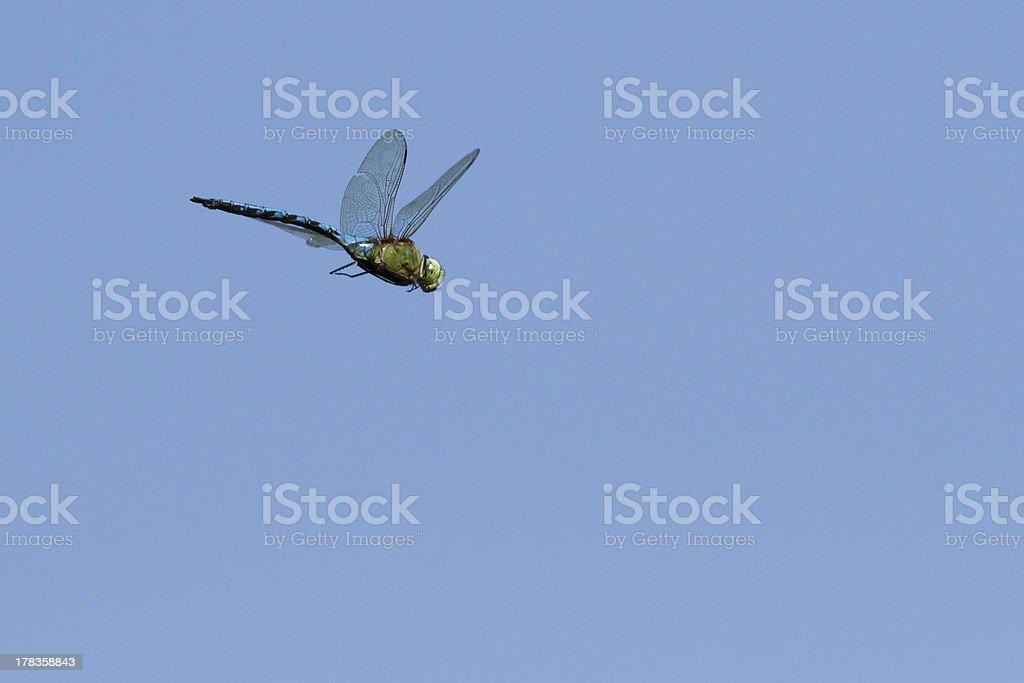 flying dragonfly royalty-free stock photo