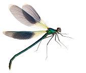 flying dragonflySimilar images: