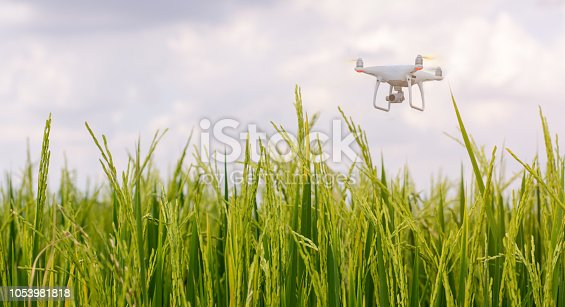 istock Flying drone above the rice or padddy field,technology agriculture concept. 1053981818