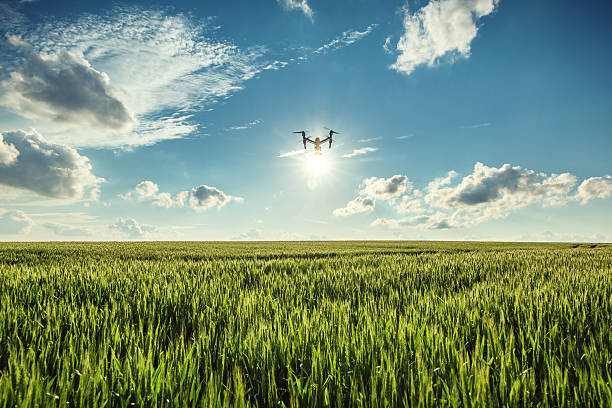 Flying drone and green wheat field - foto de stock