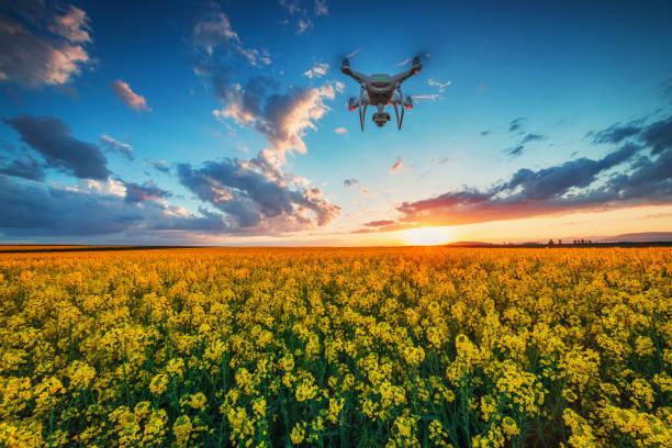 Fliegende Drohne über dem Rapsfeld im Frühling, dramatische Sonnenuntergangswolken – Foto