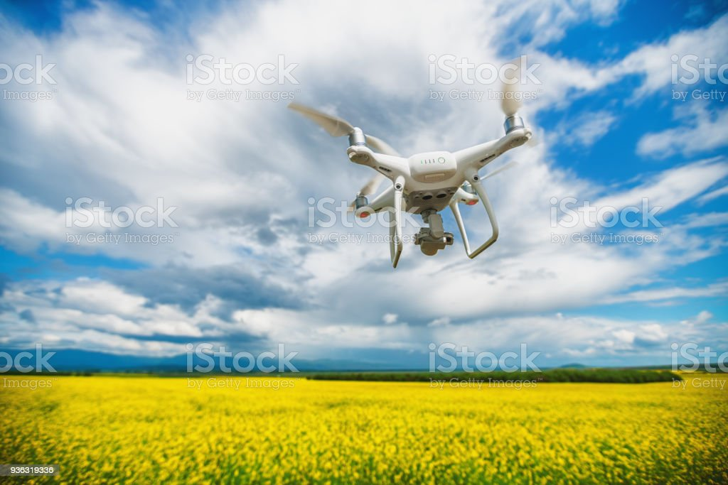 Flying drone quadcopter over the rapeseed field. stock photo