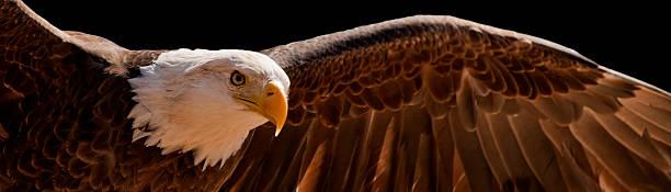 Volant eagle - Photo