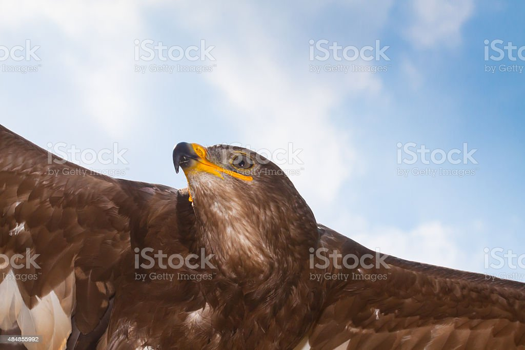 flying Aquila - foto stock