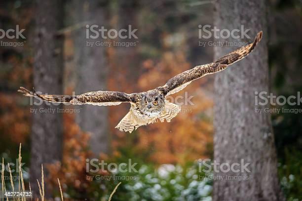 Flying eurasian eagle owl in colorfull winter forest picture id482724732?b=1&k=6&m=482724732&s=612x612&h=opisxdjvwhelzgbnog93ea 7gejt8vwtbg v4326tpm=