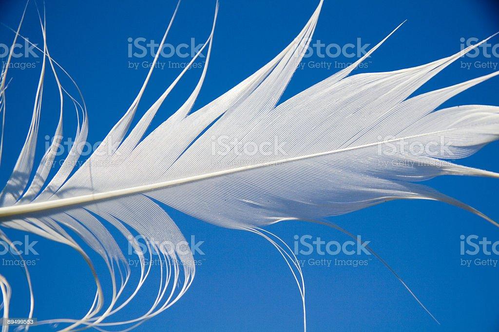 Volare di piuma foto stock royalty-free
