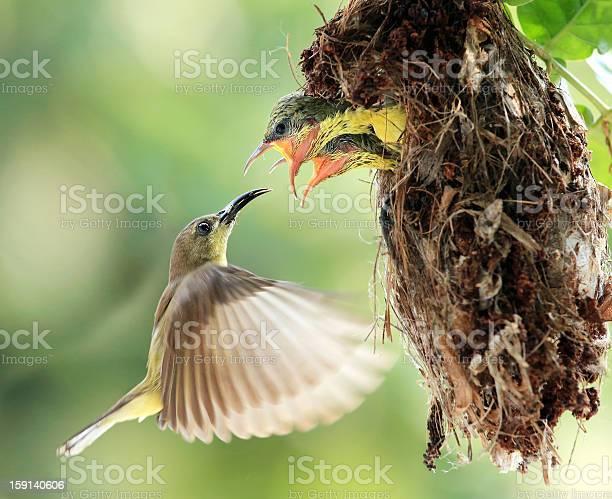 Photo of Flying Feeding