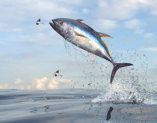 render 3d de pescado peces voladores huyendo de atún de cola amarilla - atún pescado fotografías e imágenes de stock