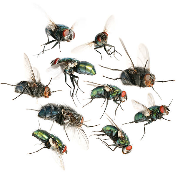 flying flies flying flies fly insect stock pictures, royalty-free photos & images