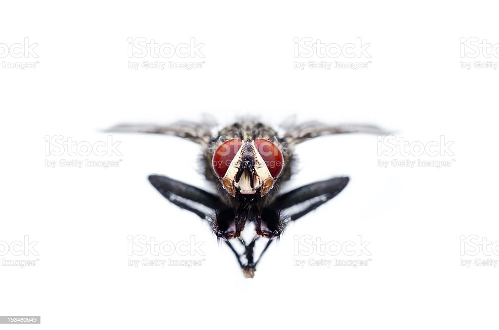 Flying fly stock photo