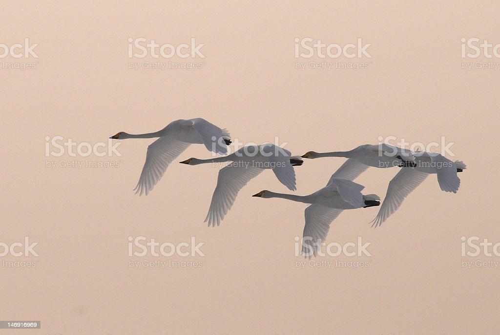 flying freedom stock photo