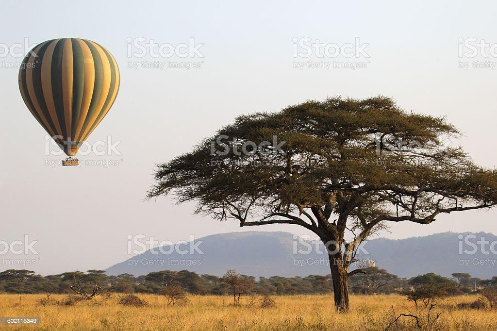Flying green and yellow balloon near an acacia tree stock photo