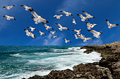 seagulls flying over waves.