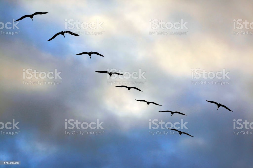 Flying group of seagulls in a blue sky royalty-free stock photo