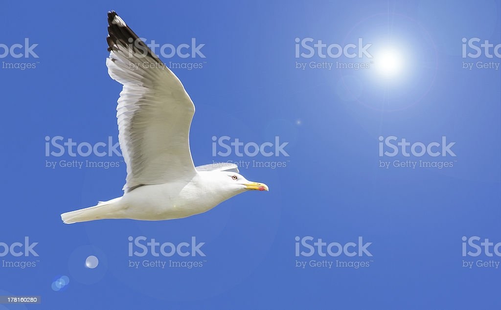 flying gull and bright sun royalty-free stock photo