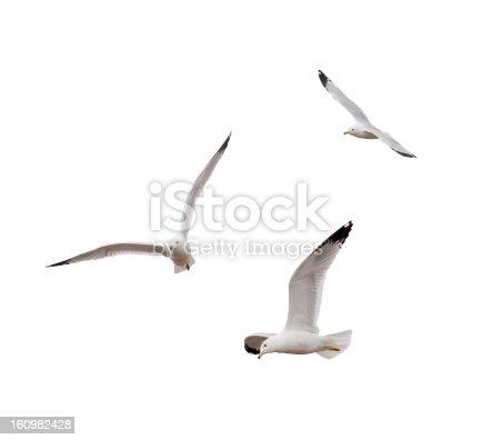 istock Flying Gulls 160982428