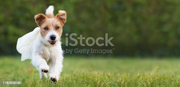 1053642922 istock photo Flying happy super hero pet dog puppy playing in the grass, web banner 1182639160